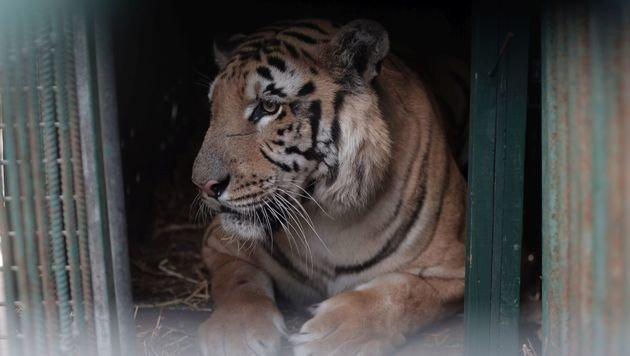 """Der """"schlimmste Zoo der Welt"""" ist Geschichte (Bild: Vier Pfoten)"""