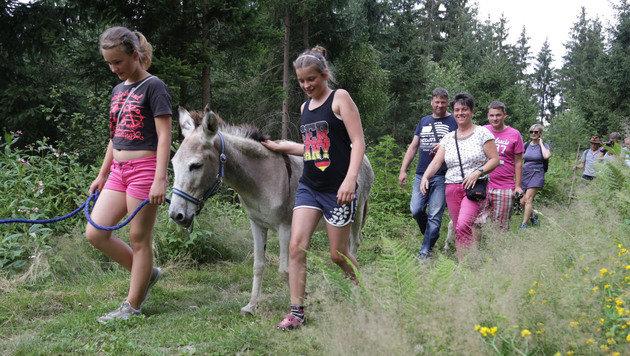 Mit den Eseln alten Sagen in Kärnten auf der Spur (Bild: Evelyn Hronek)