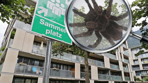 """""""Sammelplatz"""" nahmen die Spinnen (Symbolbild) wörtlich und quartierten sich in einem Wohnblock ein. (Bild: Christof Birbaumer, thinkstockphotos.de)"""