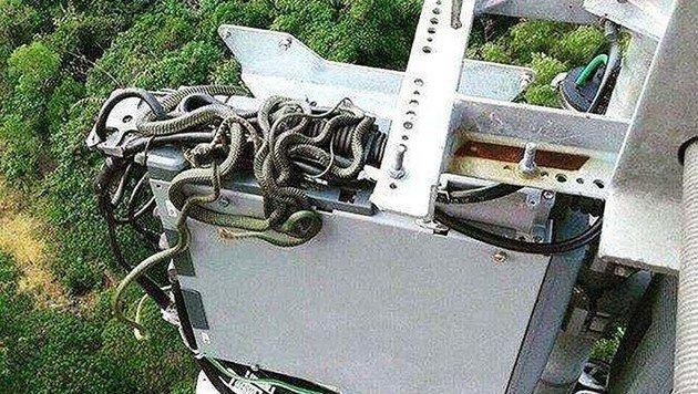 Techniker entdeckt Schlangennest auf Handymast (Bild: twitter.com/tmobile)