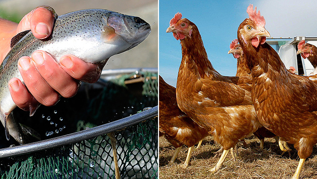 Zu wenig Fisch und Geflügel aus Österreich (Bild: dpa/Marius Becker, dpa/dpaweb/dpa/Uwe Zucchi)