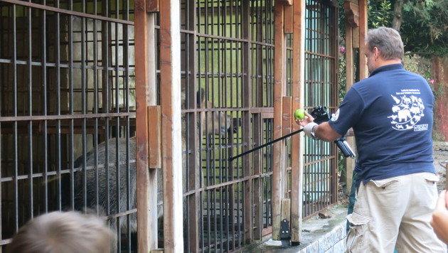 Der leitende Tierarzt Frank Göritz setzt zur Narkotisierung an. (Bild: dez)
