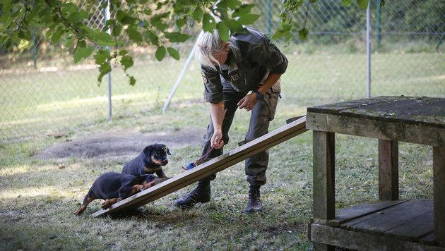 Österreichs Spürnasen im Kampf gegen den Terror (Bild: Peter LECHNER)