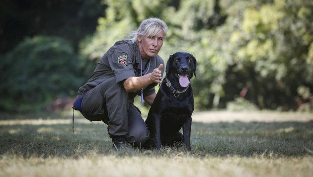 Ausgebildete Sp�rhunde im Einsatz: Auf Kommando nimmt der Hund die Sprengstoff-Spur auf. (Bild: Peter LECHNER)