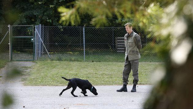 Auch junge Labradore werden ausgebildet. Diese kommen später als Spürhunde zum Einsatz. (Bild: Peter LECHNER)