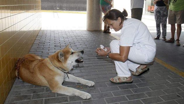 """""""Maya"""" wartet vor spanischem Spital auf Frauerl (Bild: EFE/EPA)"""