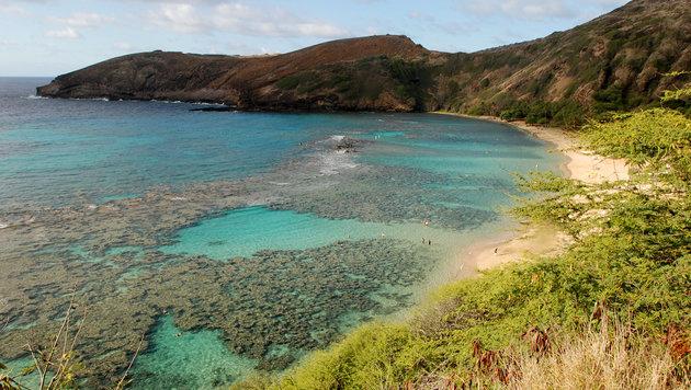 Korallenriff vor der Küste Hawaiis (Bild: AP)