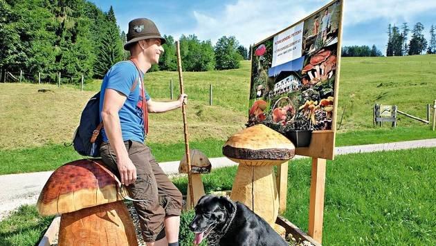 Am Schwammerlweg rund um das Wirtshaus Kreuzing-Alm kann man sich über die Pilzarten informieren. (Bild: Chris Koller, Kronen Zeitung)