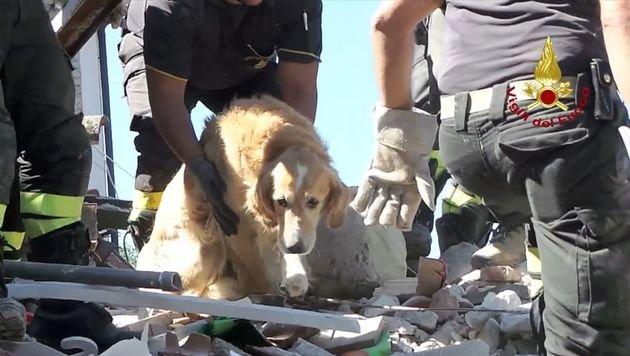 """Hund """"Romeo"""" nach neun Tagen lebend geborgen (Bild: APA/AFP/Vigili del Fuoco/HO)"""