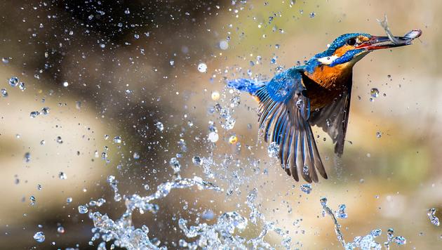 Die besten Fotos der Welt jetzt in Österreich (Bild: Massimiliano Rinaldi)