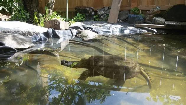 Schildkröten-Auffangstation sorgt sich um Arten (Bild: zVg)