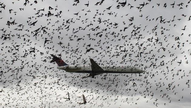 Vögel auf Flughäfen beginnen früher zu singen (Bild: AFP)