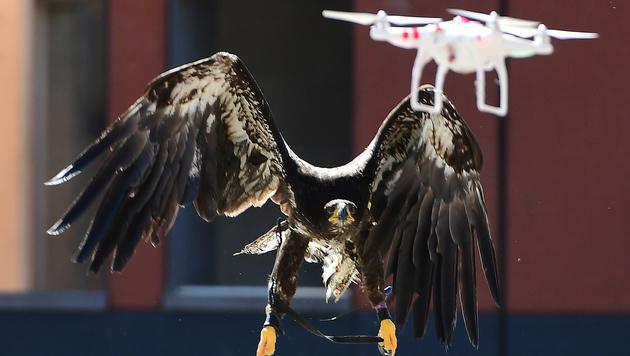 Niederlande: Polizei setzt Adler gegen Drohnen ein (Bild: APA/AFP/EMMANUEL DUNAND)