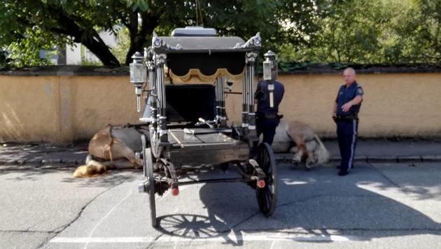 Bestattungspferde galoppierten gegen Hausmauer (Bild: Josef Mayrhofer)