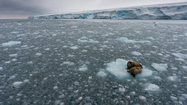 Arktiseis auf dem zweitniedrigstem Stand seit 1978 (Bild: © Christian Åslund/Greenpeace)