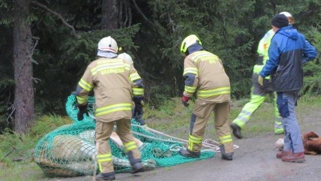 Schwierige Rettung: 7 Kälber in Graben gestürzt (Bild: FF Bramberg)