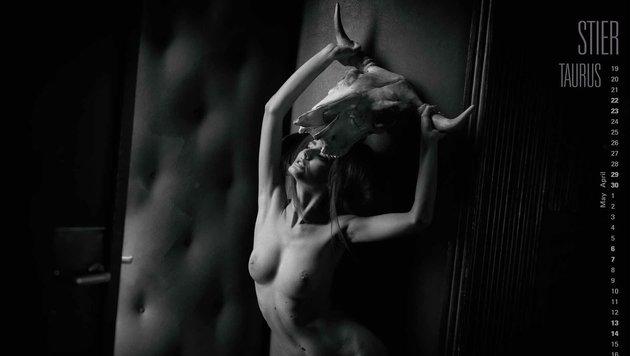 Stier (Bild: Manfred Baumann)