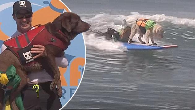 Verrückt! Hunde surfen in Kalifornien Contest (Bild: YouTube.com)