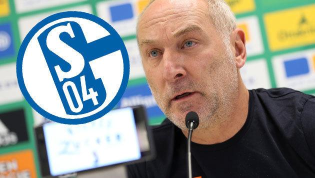 Rapids Müller glaubt an Schalke-Sieg gegen Bullen (Bild: GEPA)