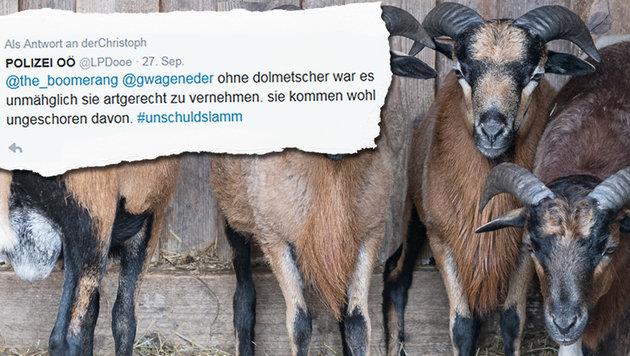 Polizei liefert sich Wortwitz-Duell auf Twitter (Bild: APA/FOTOKERSCHI.AT, twitter.com)
