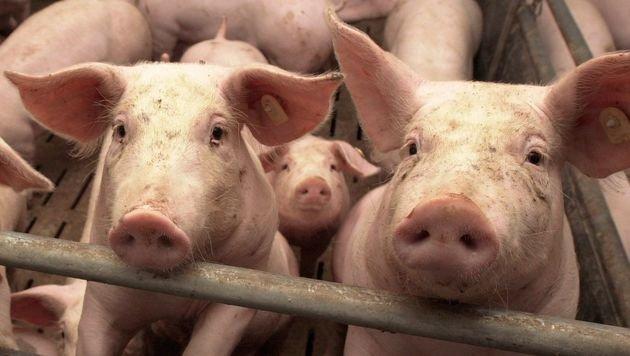Schweineschnitzel wird jetzt richtig teuer! (Bild: dpa/Carsten Rehder (Symbolbild))