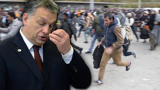Orbans Flüchtlingspolitik ist vor dem Europäischen Gerichtshof gescheitert. (Bild: APA/Erwin Scheriau, AFP/Thierry Charlier)