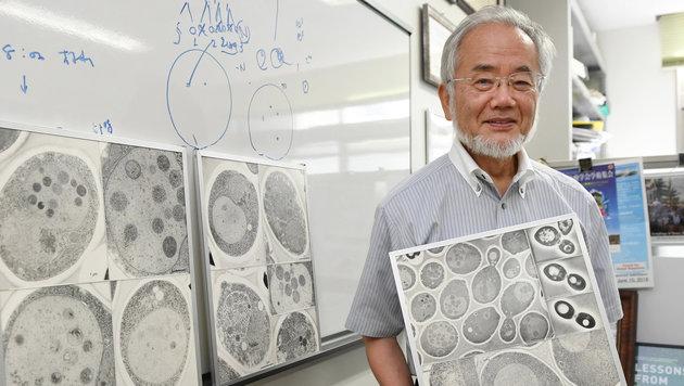 Zellforscher Yoshinori Ohsumi (Bild: AP/Akiko Matsushita/Kyodo News)