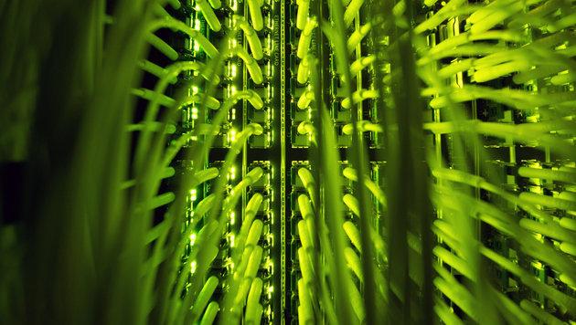 Digitale Revolution in Österreich nur langsam (Bild: APA/dpa/Daniel Reinhardt)
