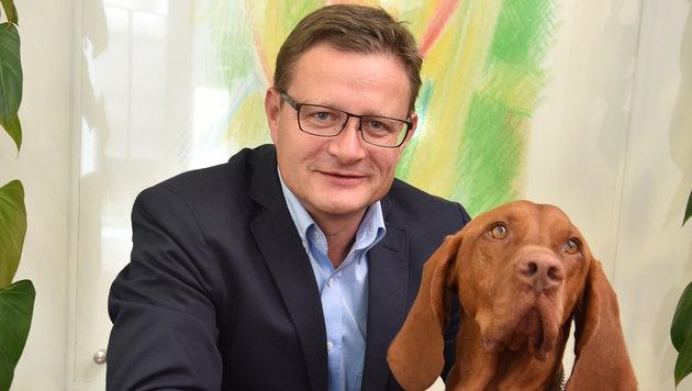 """""""Vito"""" heißt der schöne Magyar Vizsla im Büro von Fressnapf-Chef Hermann Karl Aigner. (Bild: Wolfgang Weber)"""