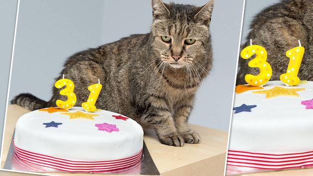 """Kater """"Nutmeg"""" ist unglaubliche 31 Jahre alt (Bild: facebook.com/Westway Veterinary Group)"""