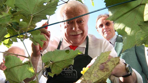 Weinlese im Jahr 2009 (Bild: Kronen Zeitung)