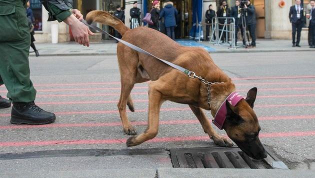 Sprengstoffhunde haben oft Probleme damit, TATP zu erschnüffeln. (Bild: APA/AFP/THOMAS KIENZLE)