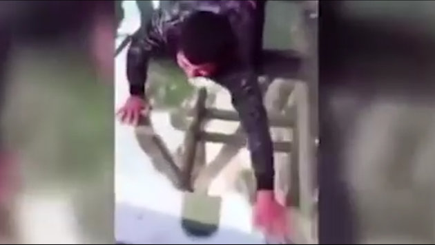 Dieser Hund hat riesige Höhenangst auf Glasbrücke (Bild: Youtube.com)