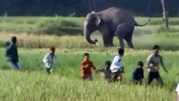 Dramatische Szenen: Die aggressiven Elefanten trampelten alles nieder, was ihnen im Weg stand. (Bild: Hilfsorganisation SONNE)