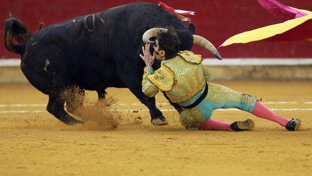 Torero-Legende Padilla erneut fast aufgespießt (Bild: AFP)