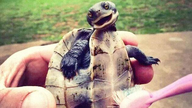 Die vielleicht glücklichsten Tiere der Welt (Bild: via 9gag.com)