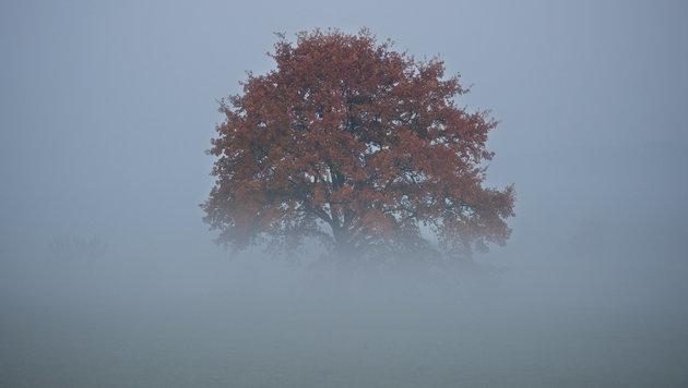 Am Wochenende zeigt sich Herbst von bester Seite (Bild: APA/dpa-Zentralbild/Arno Burgi)