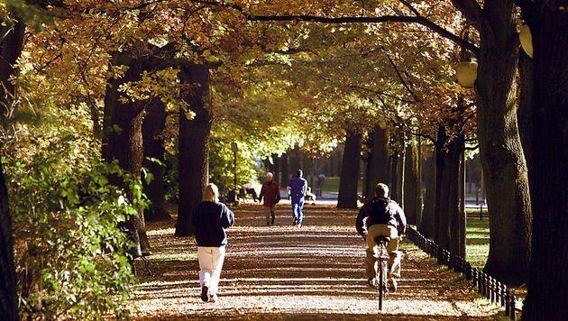 Am Wochenende zeigt sich Herbst von bester Seite (Bild: dpa/dpaweb)
