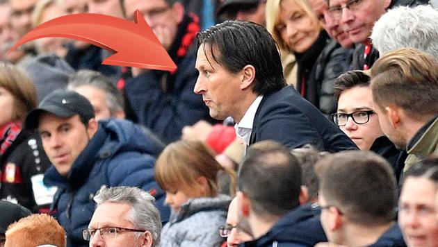 """Ex-Bullen-Coach Schmidt fliegt! """"Leck mich . . ."""" (Bild: AP)"""