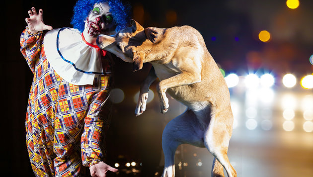 Hund schlägt Grusel-Clown in Kärnten in die Flucht (Bild: krone.at-Grafik, thinkstockphotos.de (Symbolbild))