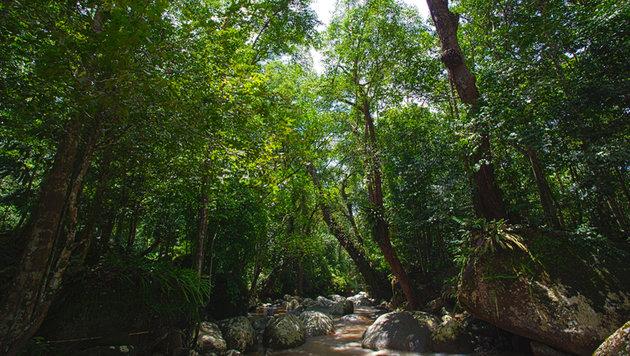 Wer in die Region Perak in Malaysia reist, kann dort tropische Urwälder voller Leben erforschen. (Bild: flickr.com/musimpanas)