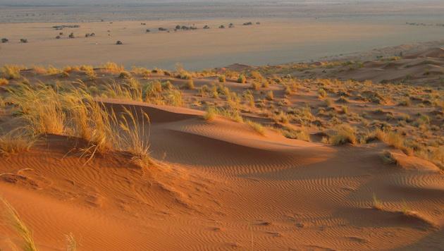 Der Süden Europas könnte bald zur Wüste werden (Bild: dpa/Simone Humml)