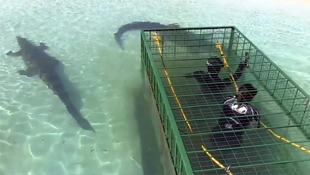 spiele mit haien