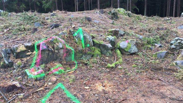 Genau hier fand der Waldarbeiter den Toten. (Bild: APA/ORF N…/GERNOT ROHRHOFER)