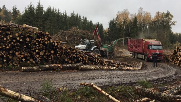 Nahe diesem Holzplatz bei Waidhofen a.d. Thaya machte der Arbeiter die grausige Entdeckung. (Bild: APA/ORF N…/GERNOT ROHRHOFER)