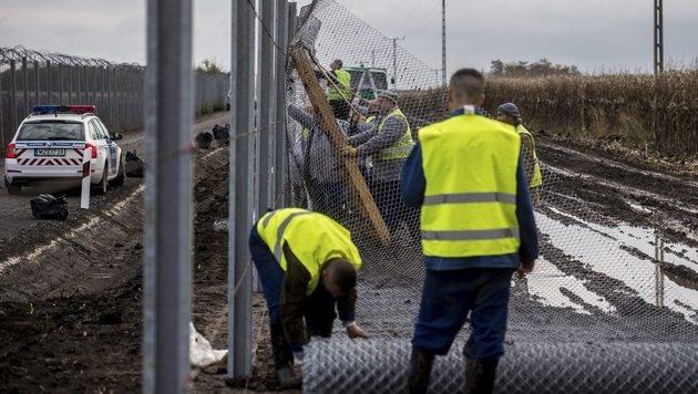 Errichtung eines Grenzzauns zwischen Ungarn und Serbien (Bild: AP)