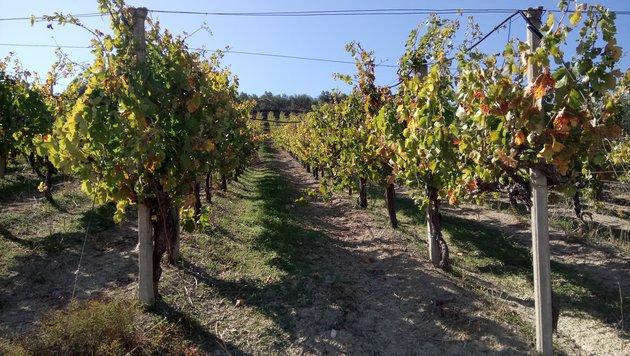 Teil 10: Von Steinen, Wein und Steuern auf Kreta (Bild: Max Rogers)