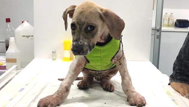 Türkei: Hund mit Klebstoff misshandelt - gerettet (Bild: Screenshot/YouTube.com)