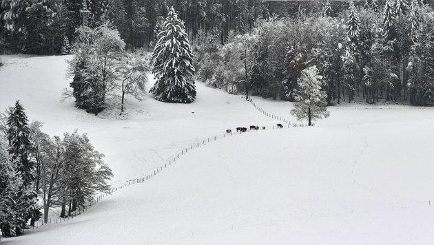 Frau Holle schüttelt in den Bergen die Betten aus (Bild: APA/BARBARA GINDL)
