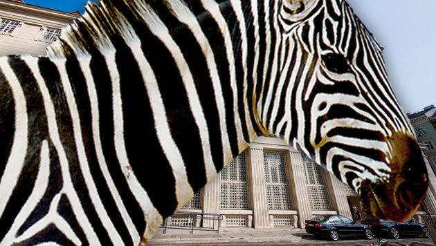 Wiener darf mit Nachnamen Zebra heißen (Bild: VfGH/Achim Bieniek, thinkstockphotos.de)